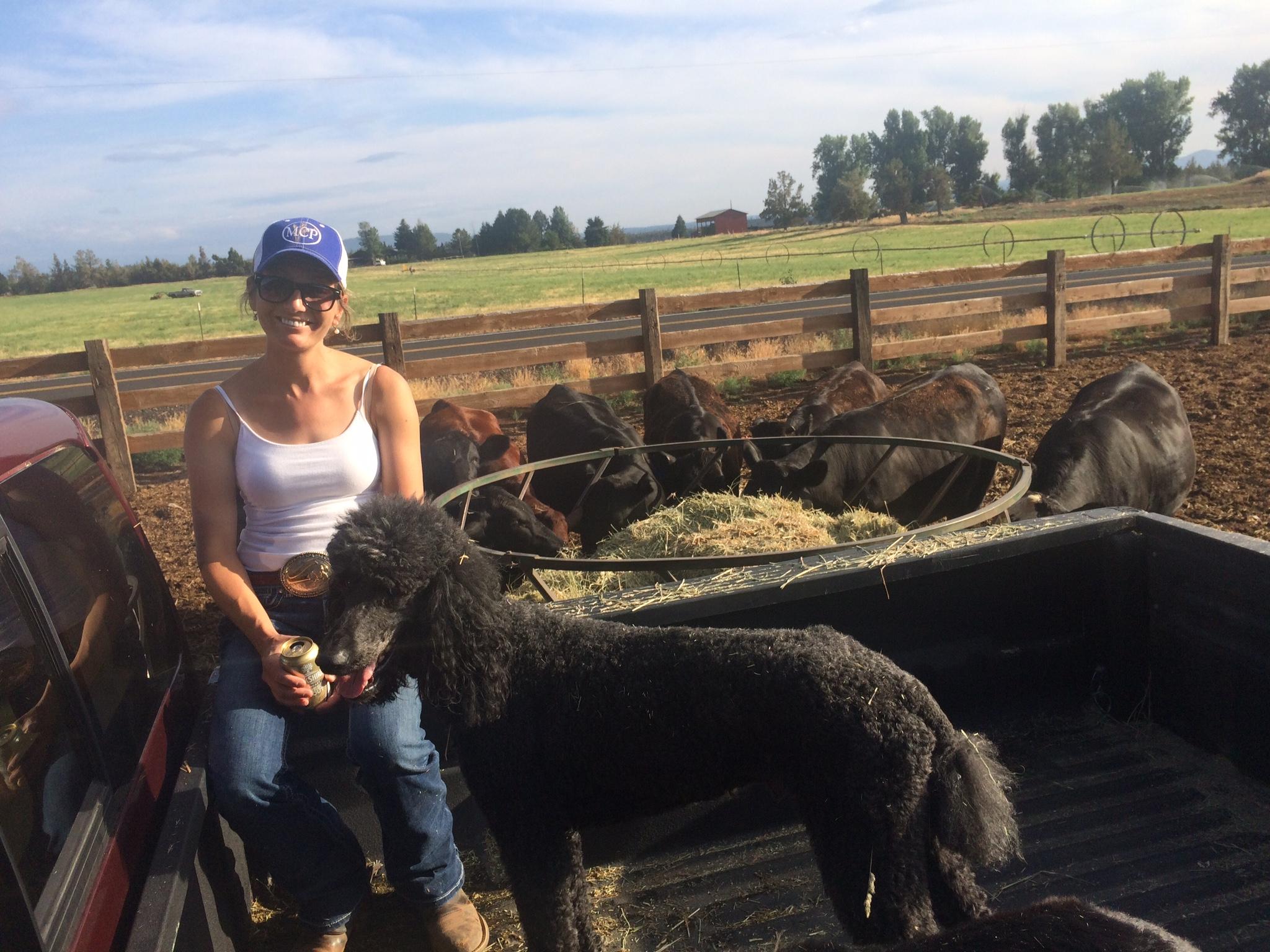 feeding cows.JPG