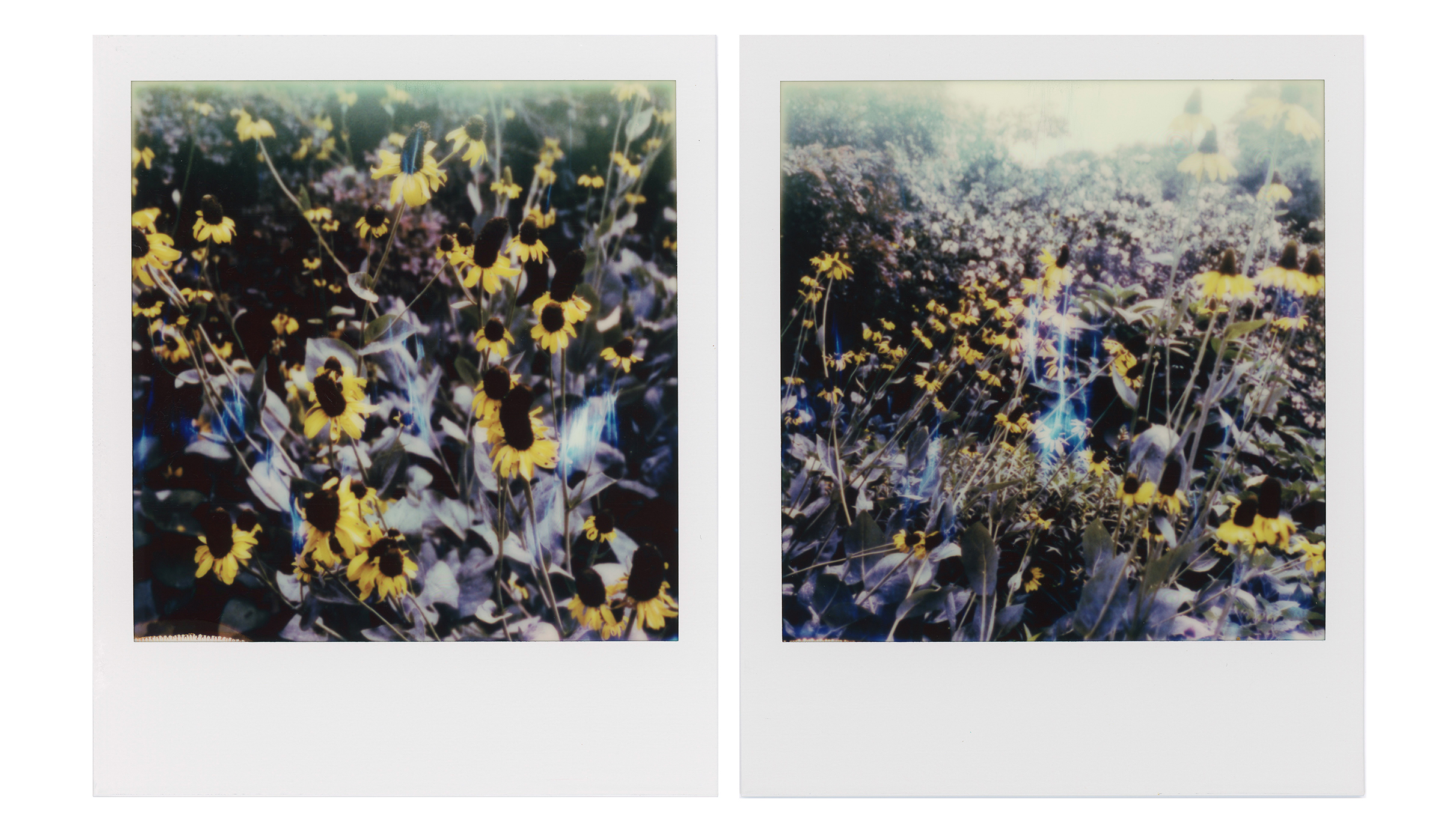 Wildflowers photographed in Fort Worth. TX for my Polaroids Postcard Pack available in my online shop.