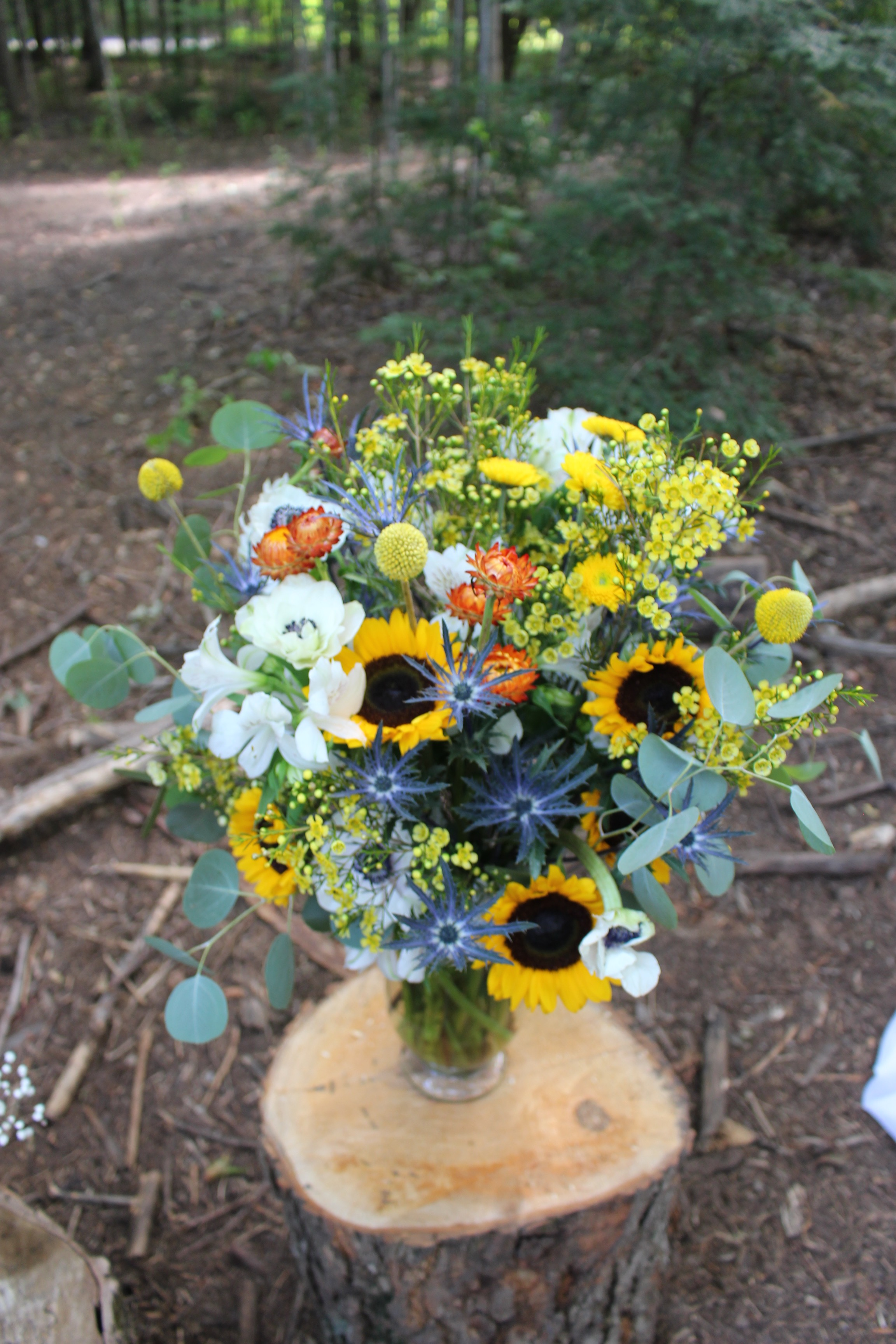 Summer Sunflower - Tiffin Center for Conservation