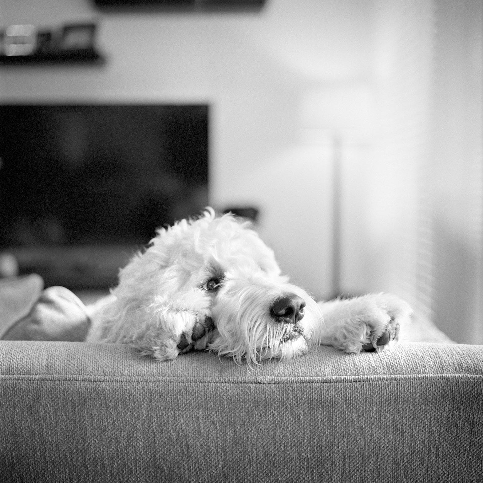 dog photography Boston