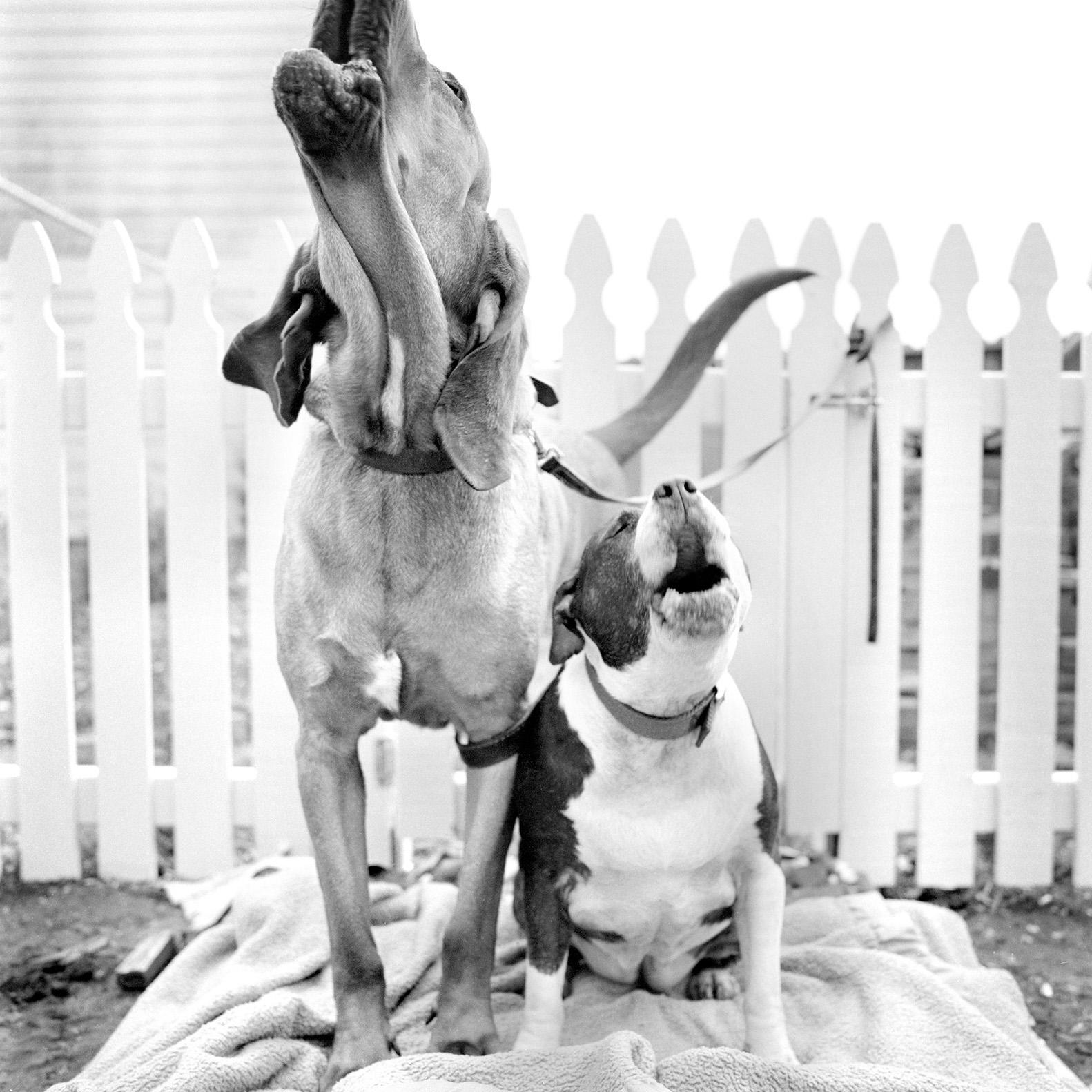 black white dog photography