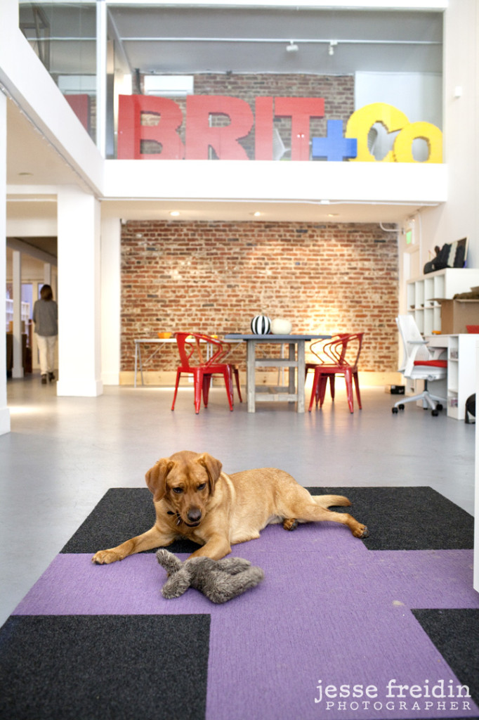 Brit and Co: Dogs in the Workplace- Jesse Freidin