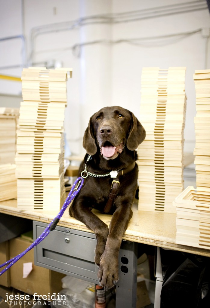 Dogs in the Workplace: The Dogs of DodoCase