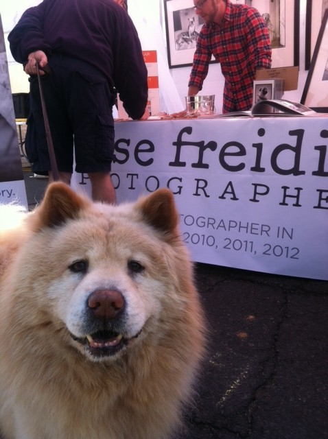 Jesse Freidin Castro Street Fair dog photographer