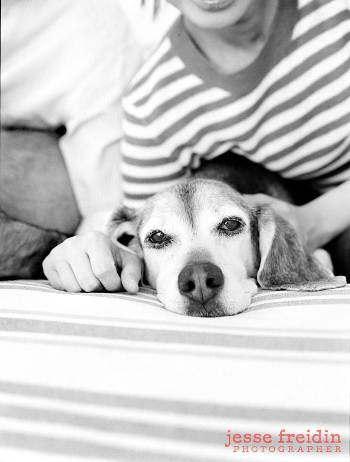 Los Angeles pet portraits