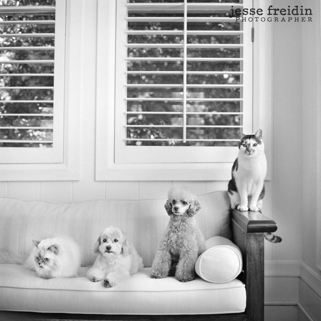 LA Pet Photographer