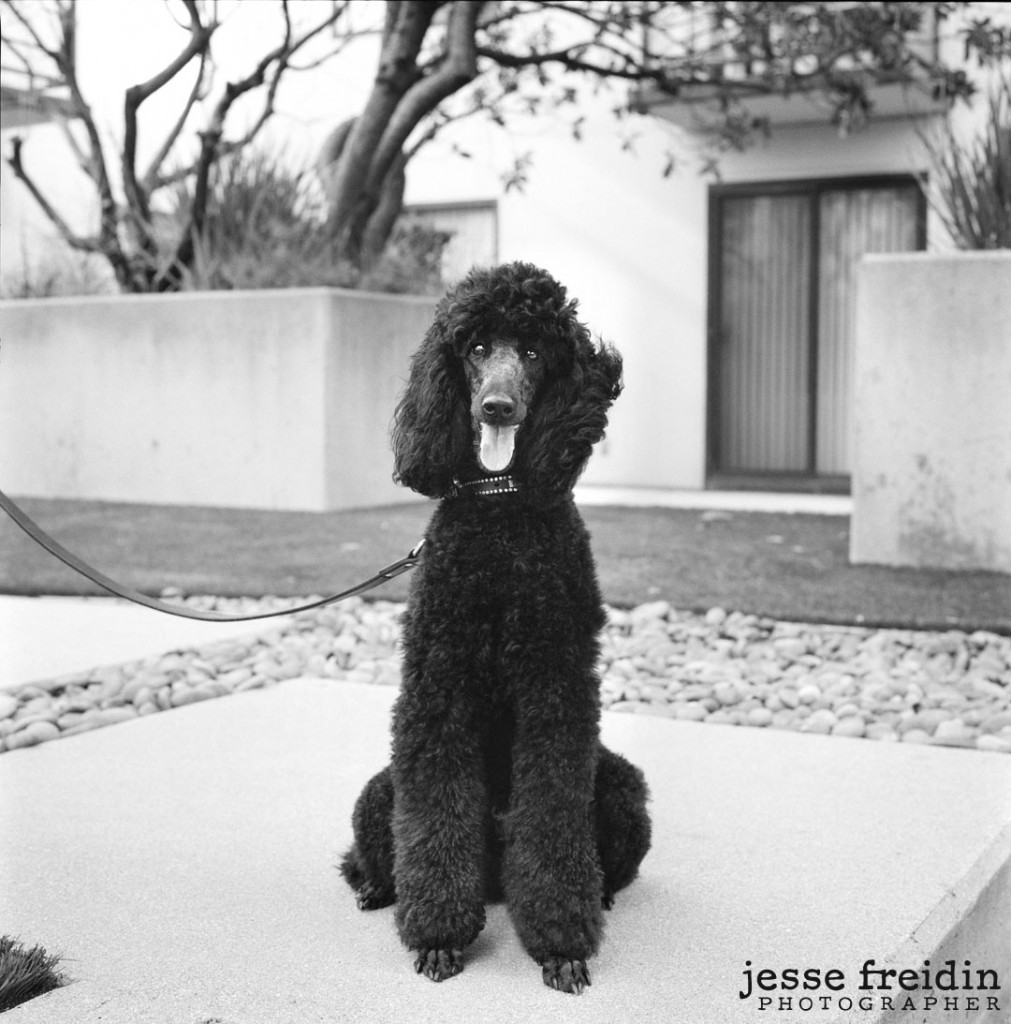 Black and White Pet Photography in LA