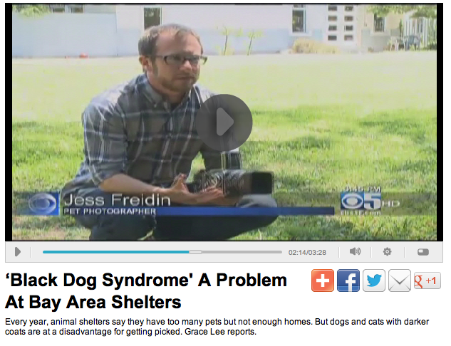 Black Dog Syndrome CBS 5 photographer