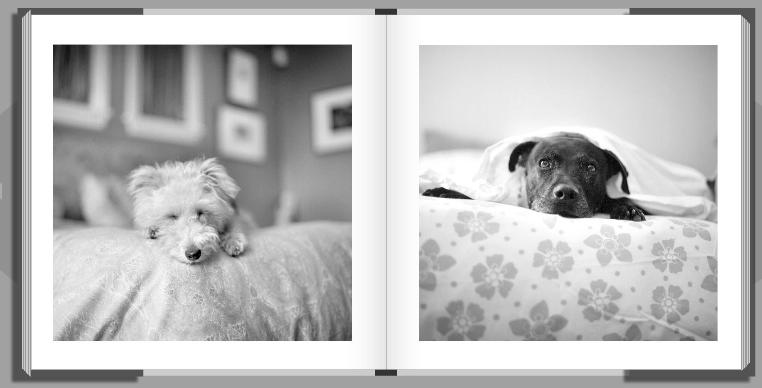 dog photography book