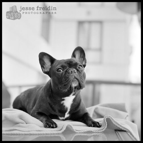 Jesse Freidin Photographer: Breed of the Month