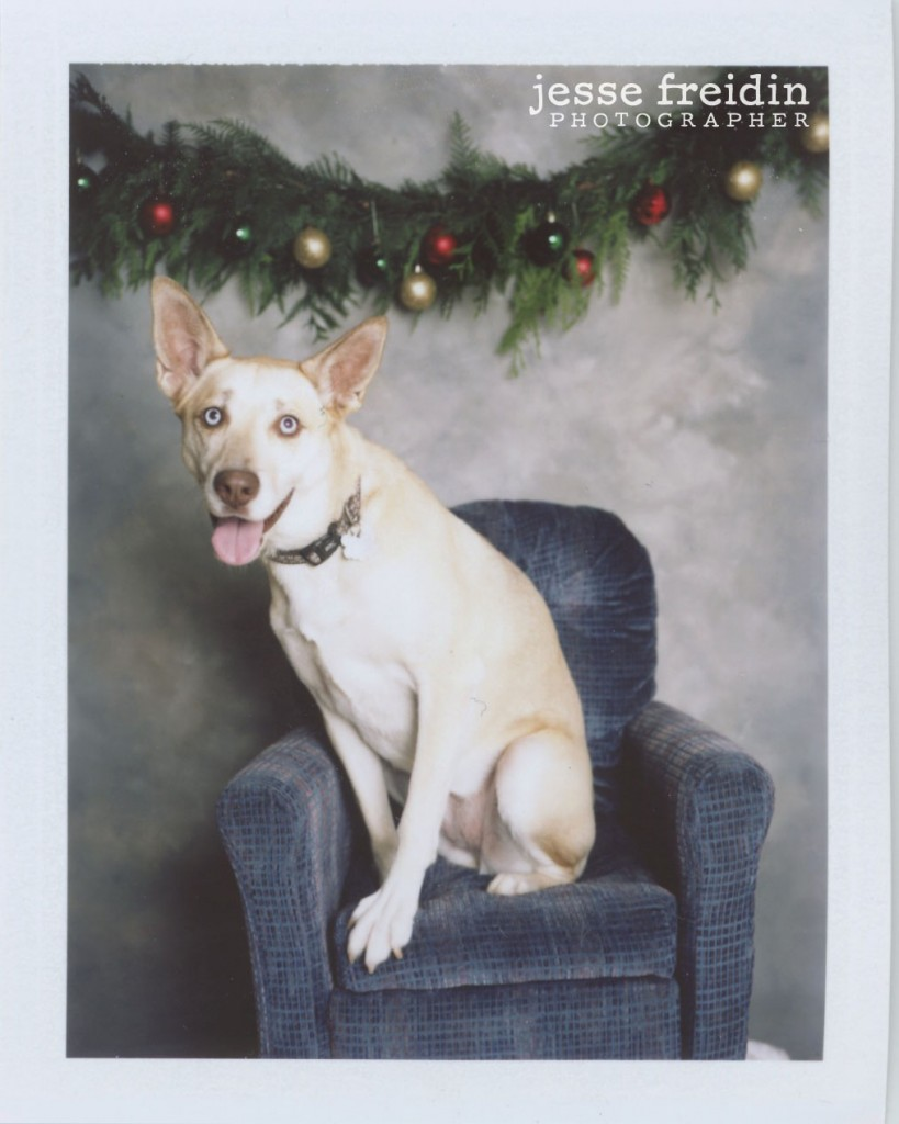 Holiday Photobooth for Dogs: Jesse Freidin