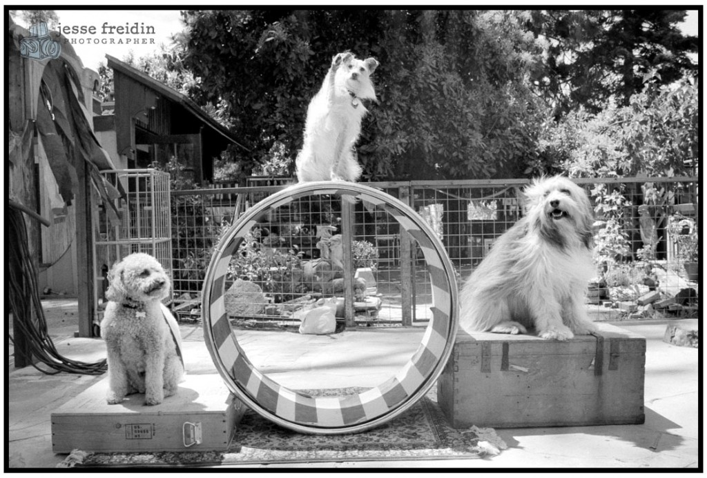 Dog Circus: Friends of the Family Dog Training