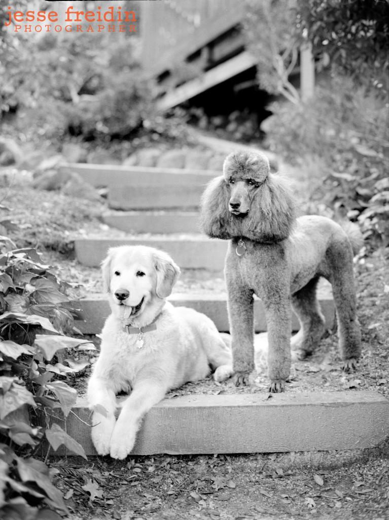 Pet Photography Los Angeles