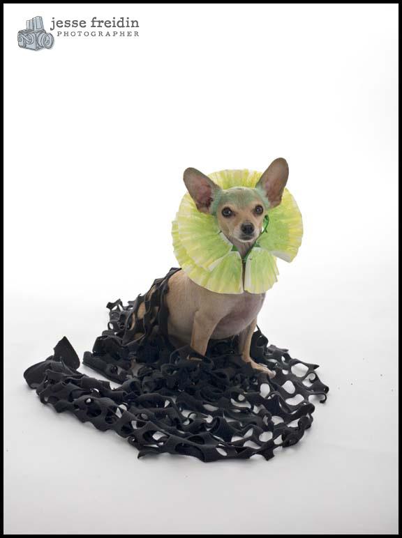 Freidin Dog Costume Halloween