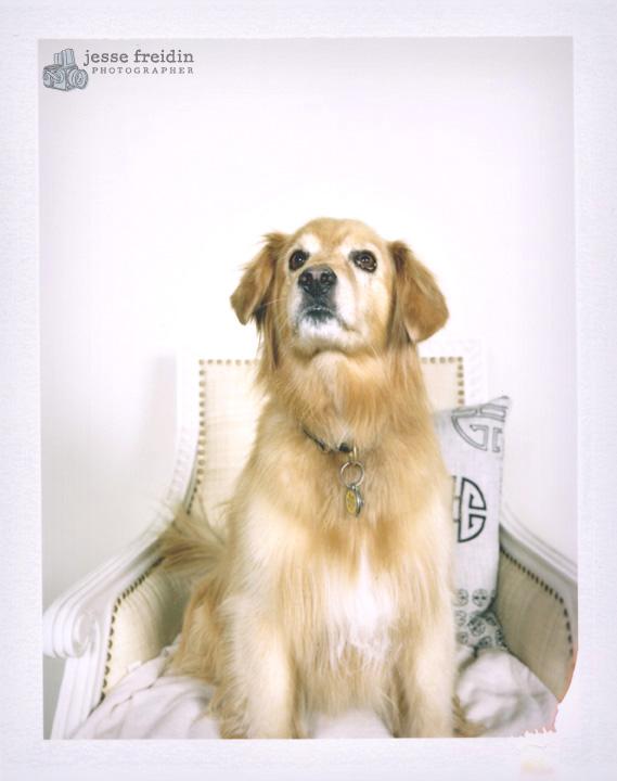 Jesse Freidin Photographer: Gumps Dogs