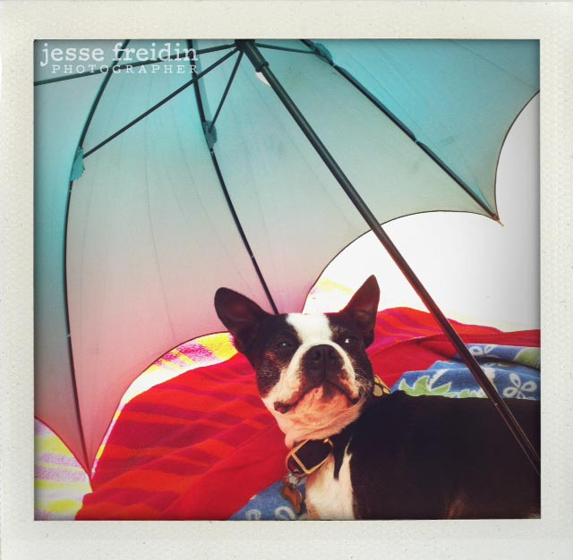 Pancake the Boston Terrier by the River
