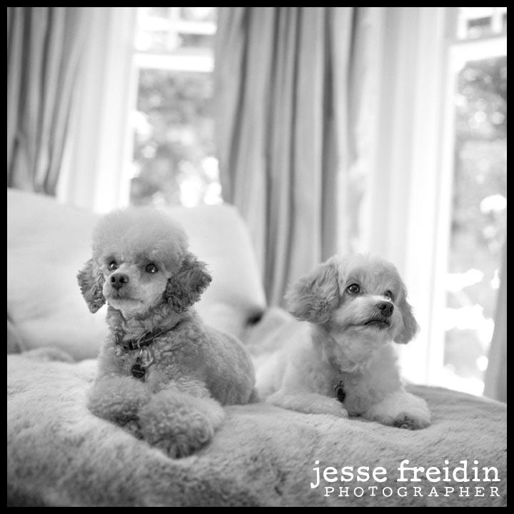 San Francisco Pet Photographer
