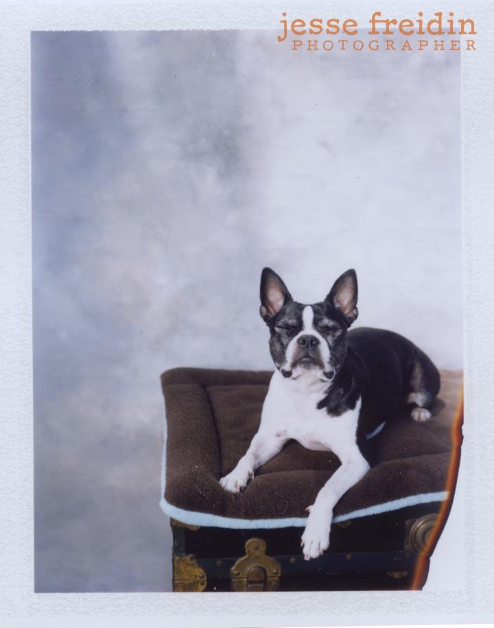 Jesse Freidin: Polaroid Doggie Photobooth