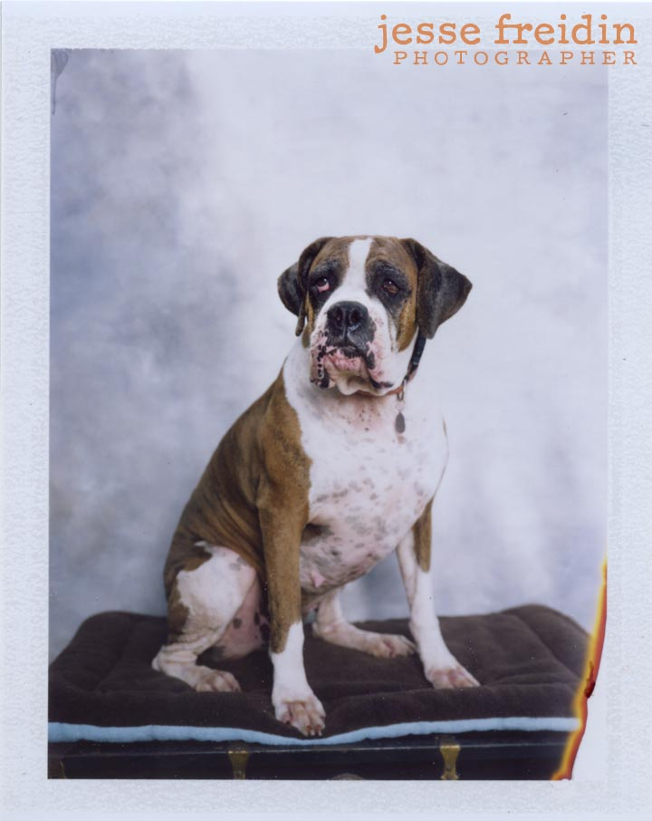 Instant Doggie Photobooth Jesse Freidin