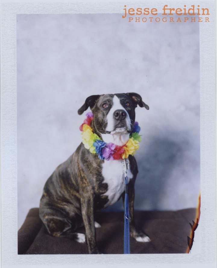 Photobooth for Dogs with Polaroid film