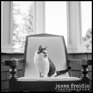 San Francisco Pet Photography