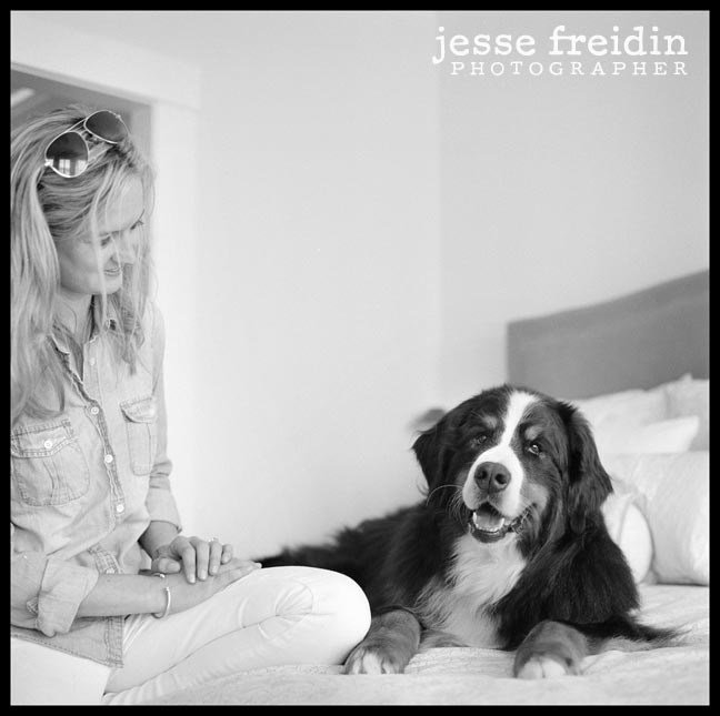 Bernese Mountain Dog photography