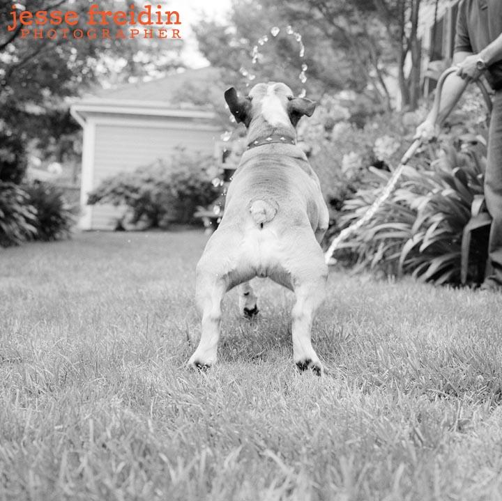 Jesse Freidin Dog Photography