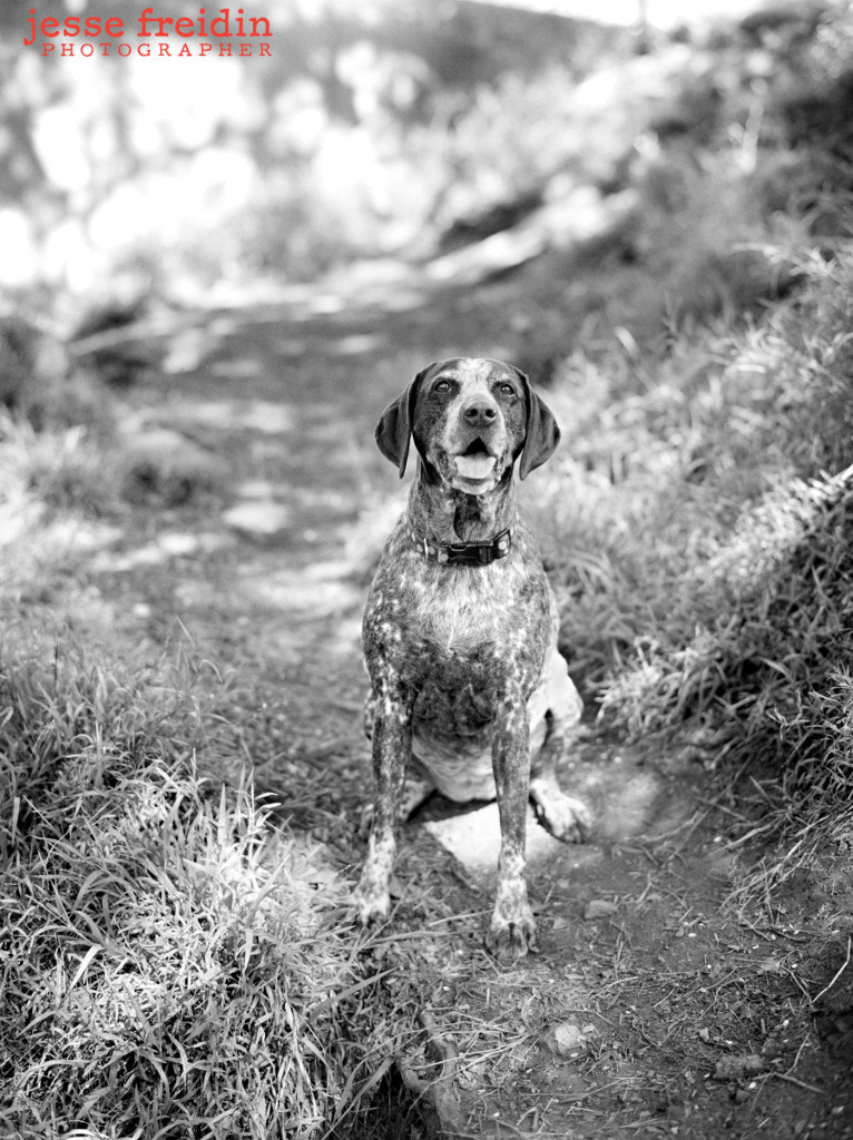 Los Angeles Pet Photographer