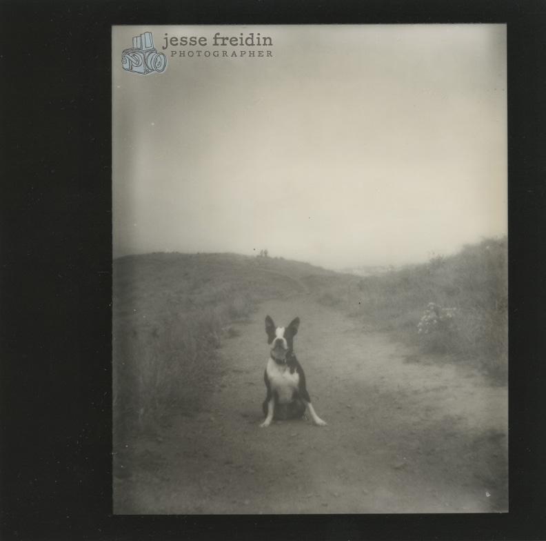 Impossible Project dog portrait