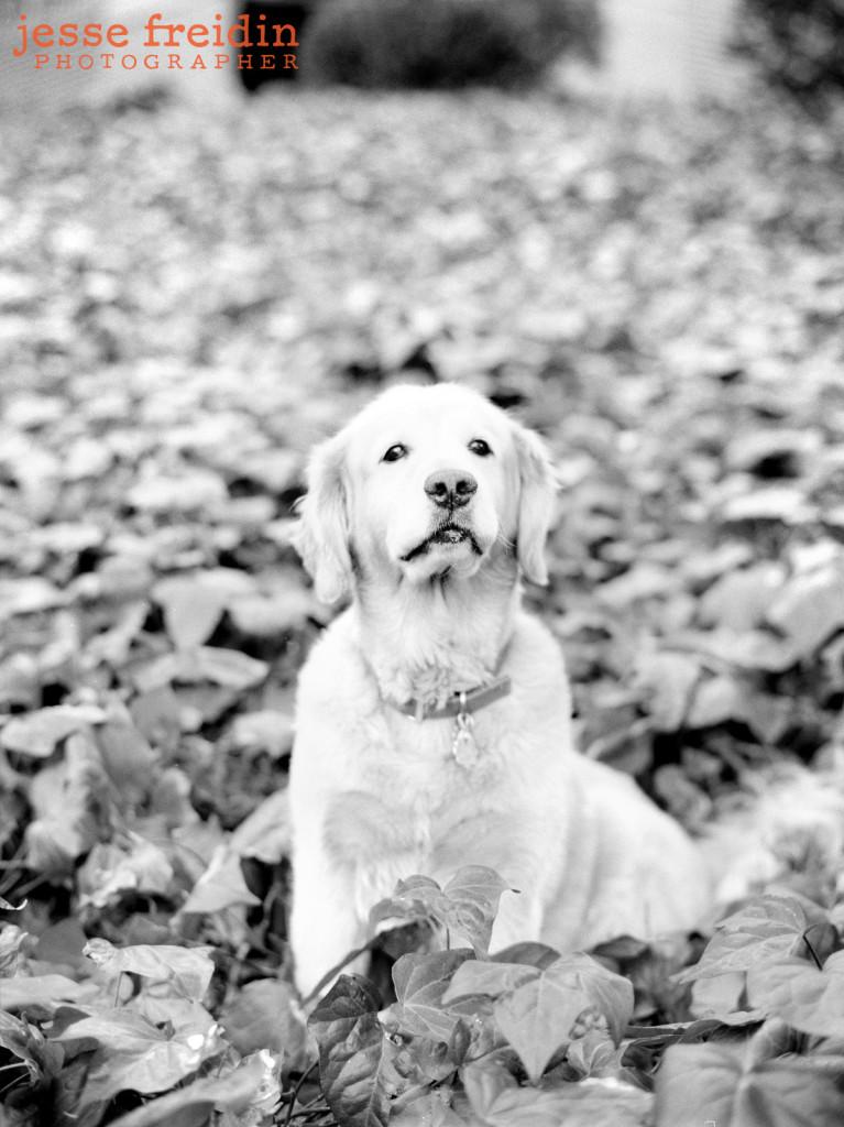Los Angeles Dog Photographer