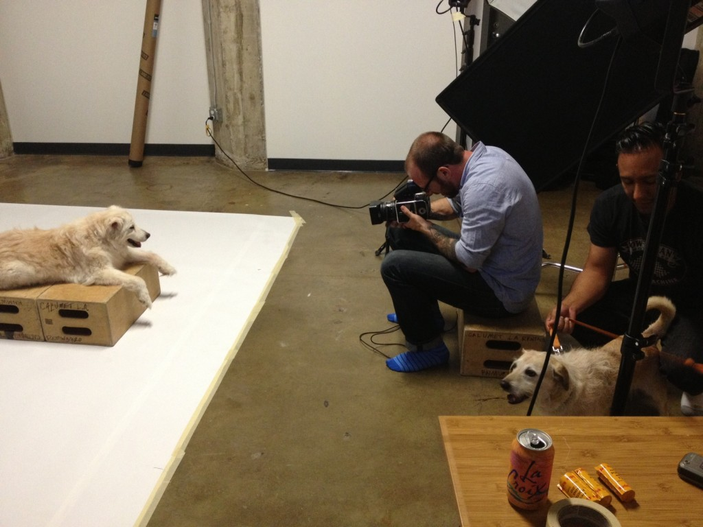 DOG FOOD: Dogs With Food Names Photography Series by Jesse Freidin