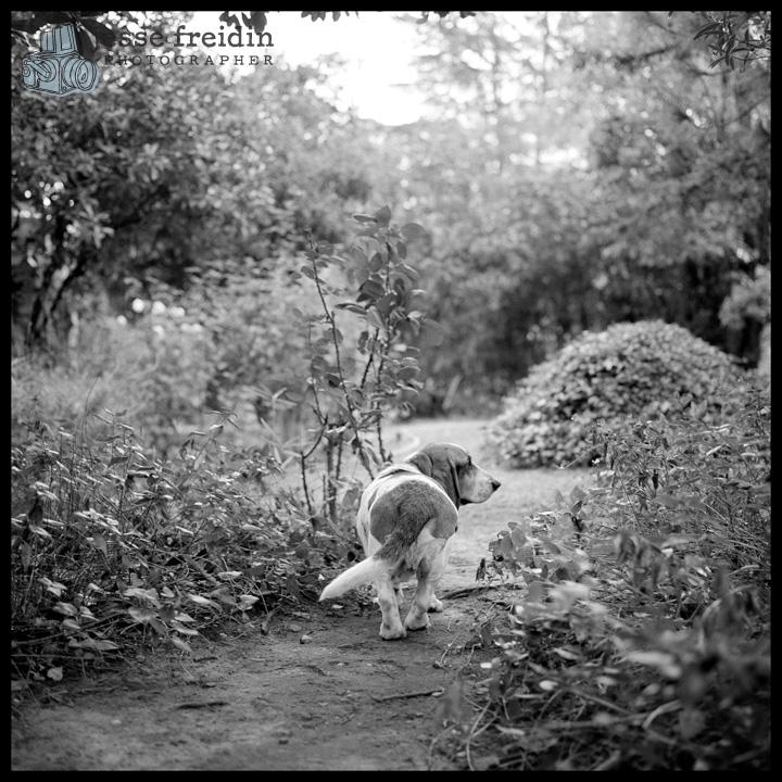 Magoo: Jesse Freidin Photographer