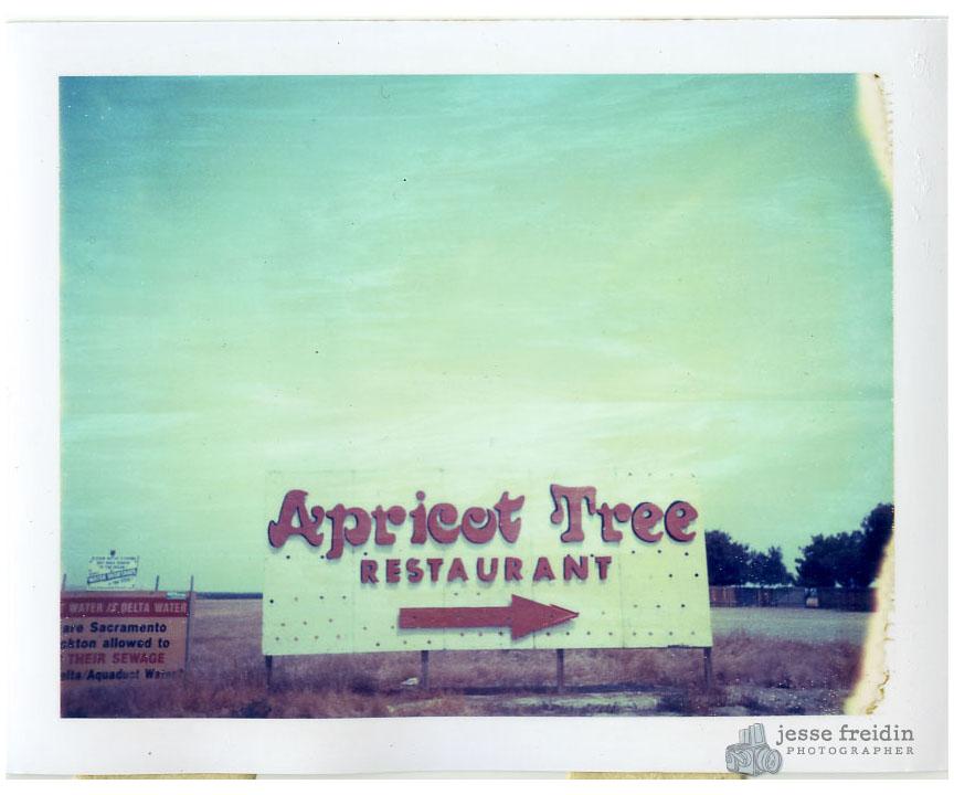 Polaroid Apricot Tree Restaurant