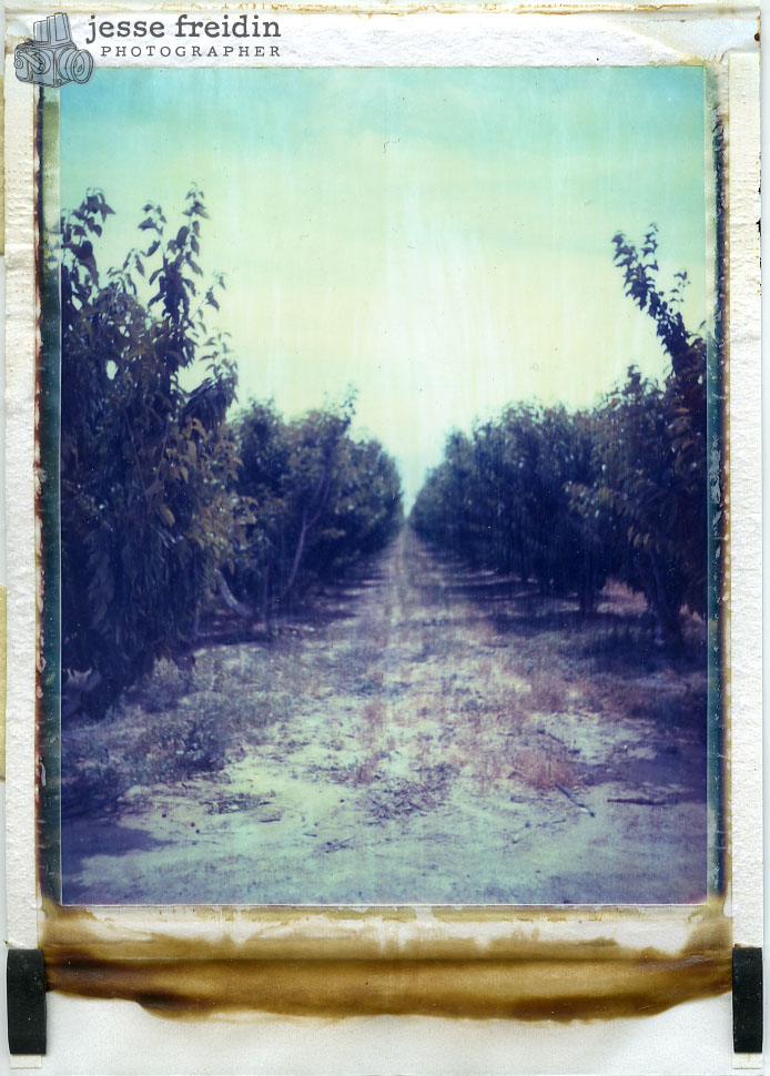 Polaroid Orchard