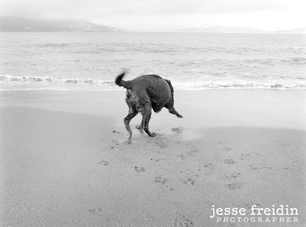 Best San Francisco Dog Photography