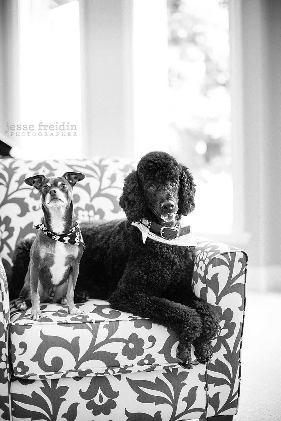 Dog Photography San Francisco