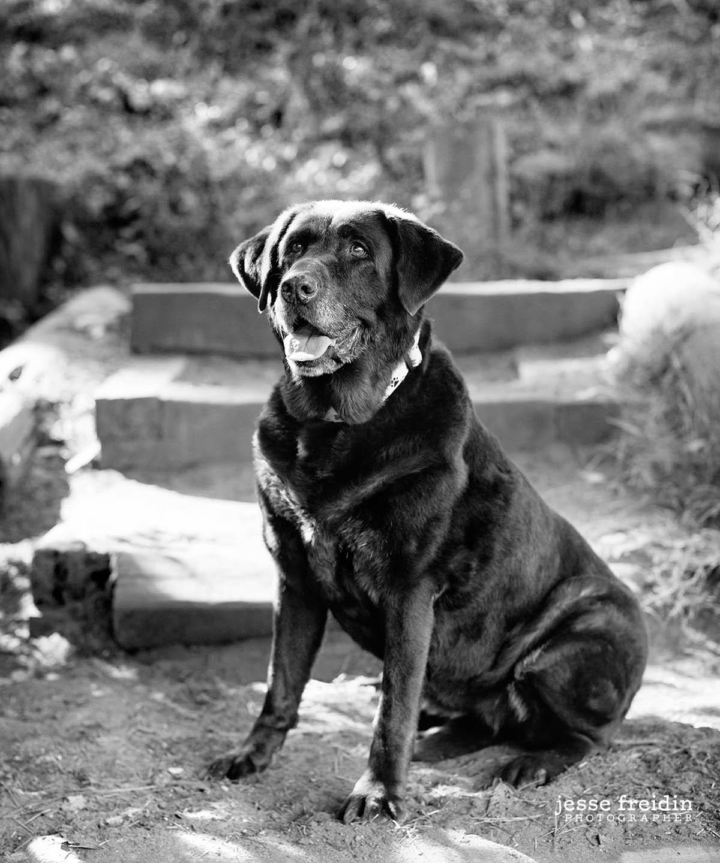 San Francisco Dog Photography in Golden Gate Park