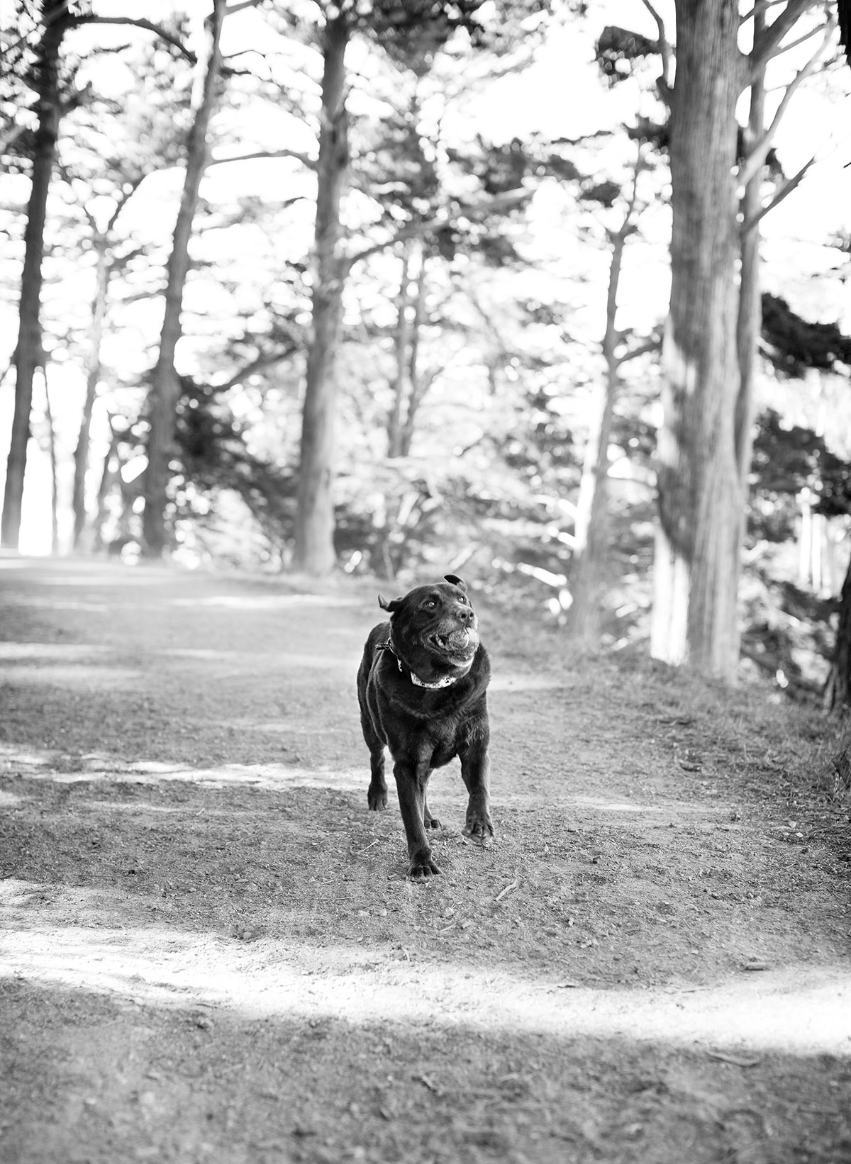 Dog Photographer in San Francisco