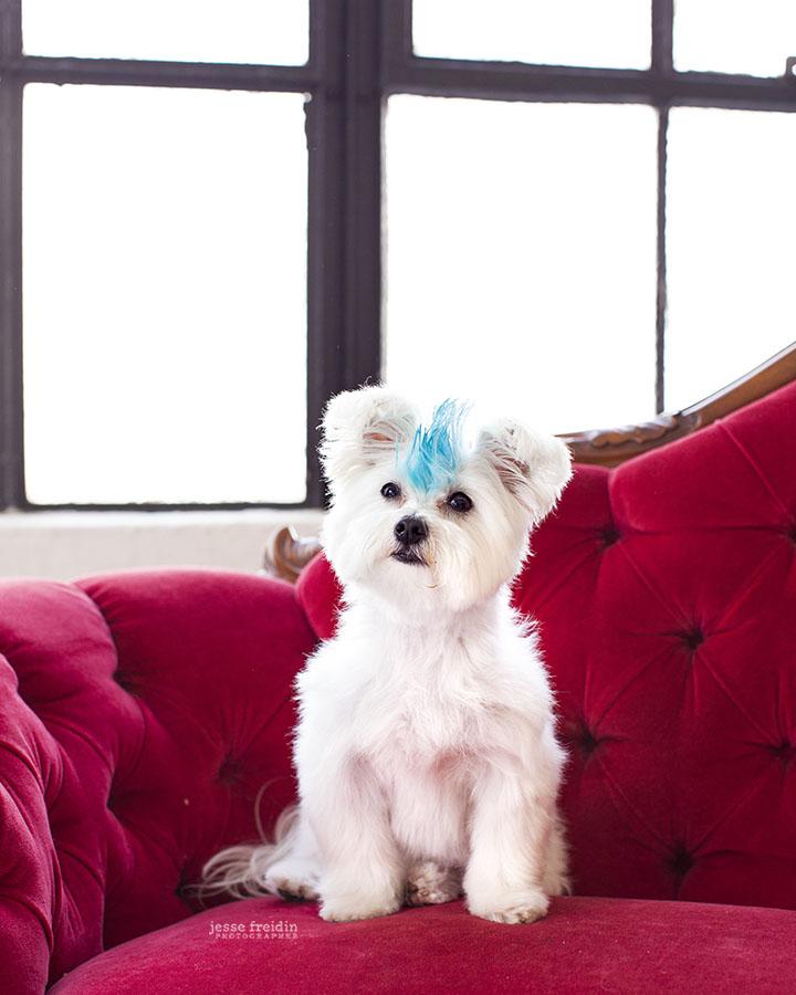 Cooper on NBC's 1st Look with Jesse Freidin Dog Photographer