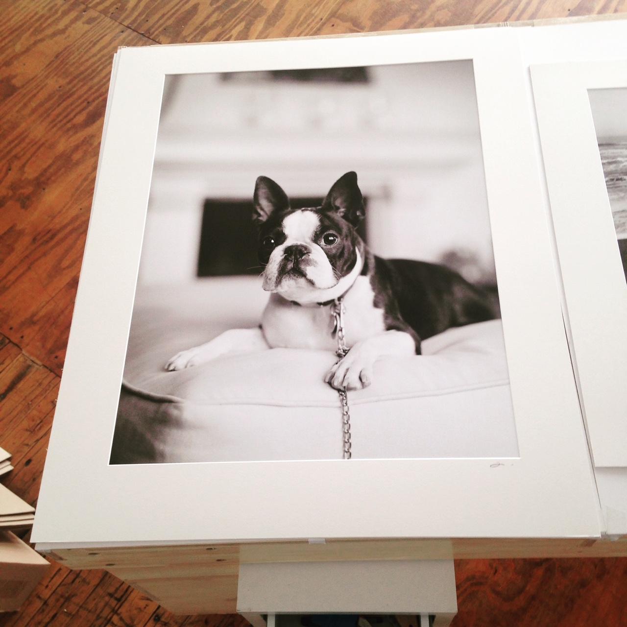 Dog Photography fine art prints