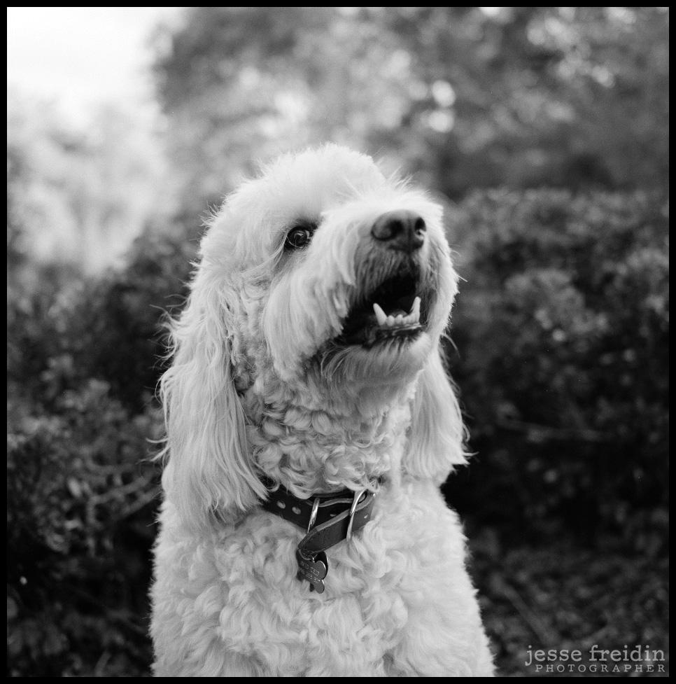 Best Dog Photographer in San Francisco