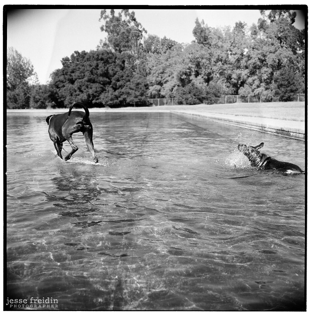 Dogs Walking On Water