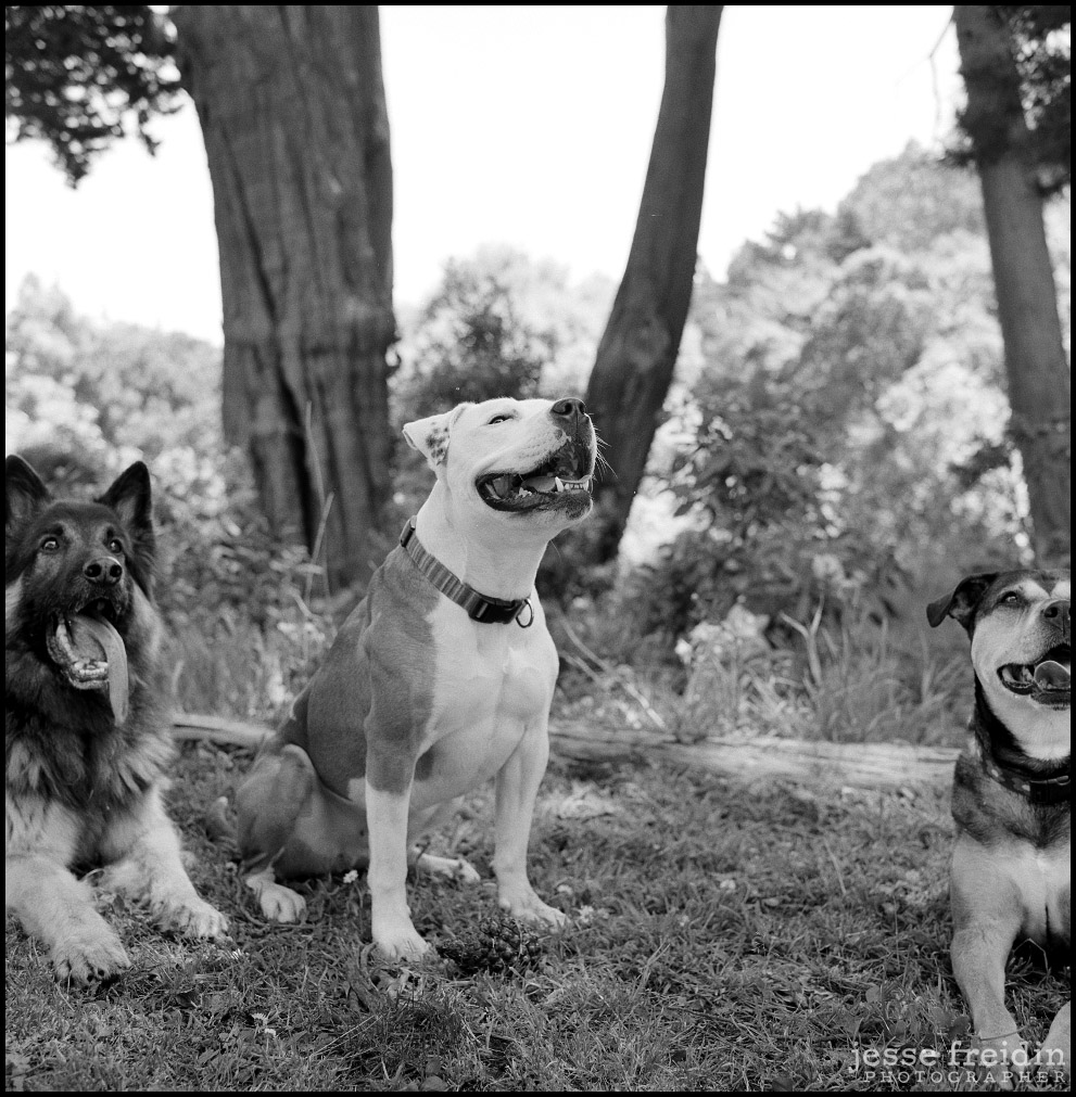 Best New York Dog Photographer
