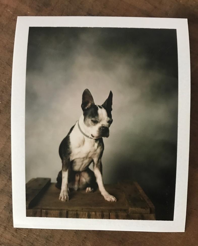 Instant Dog Photobooth