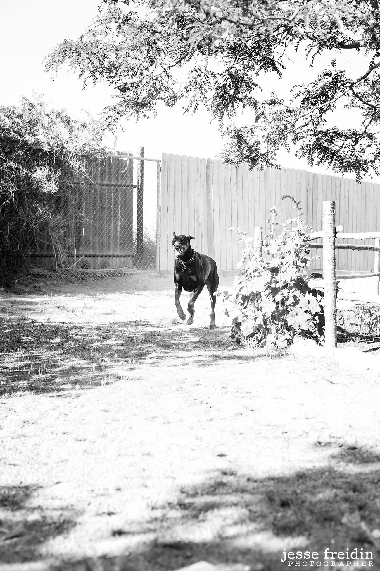 Santa Fe dog photography: Jesse Freidin