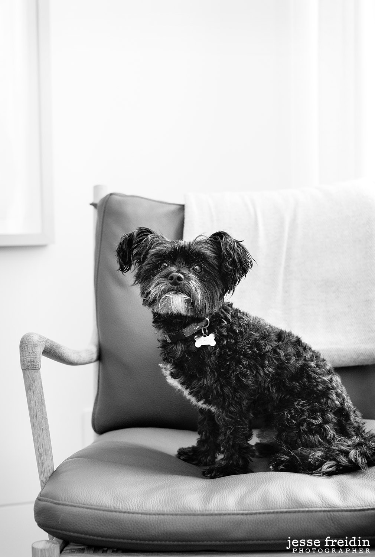 award-winning-pet-photography