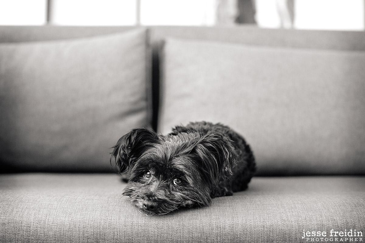 award-winning-dog-photographer