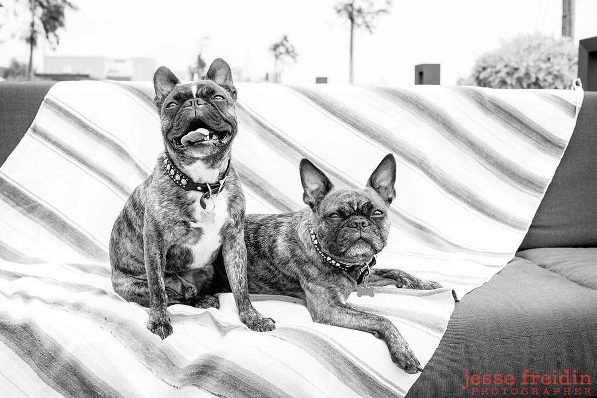 san-francisco-dog-photographer_jesse