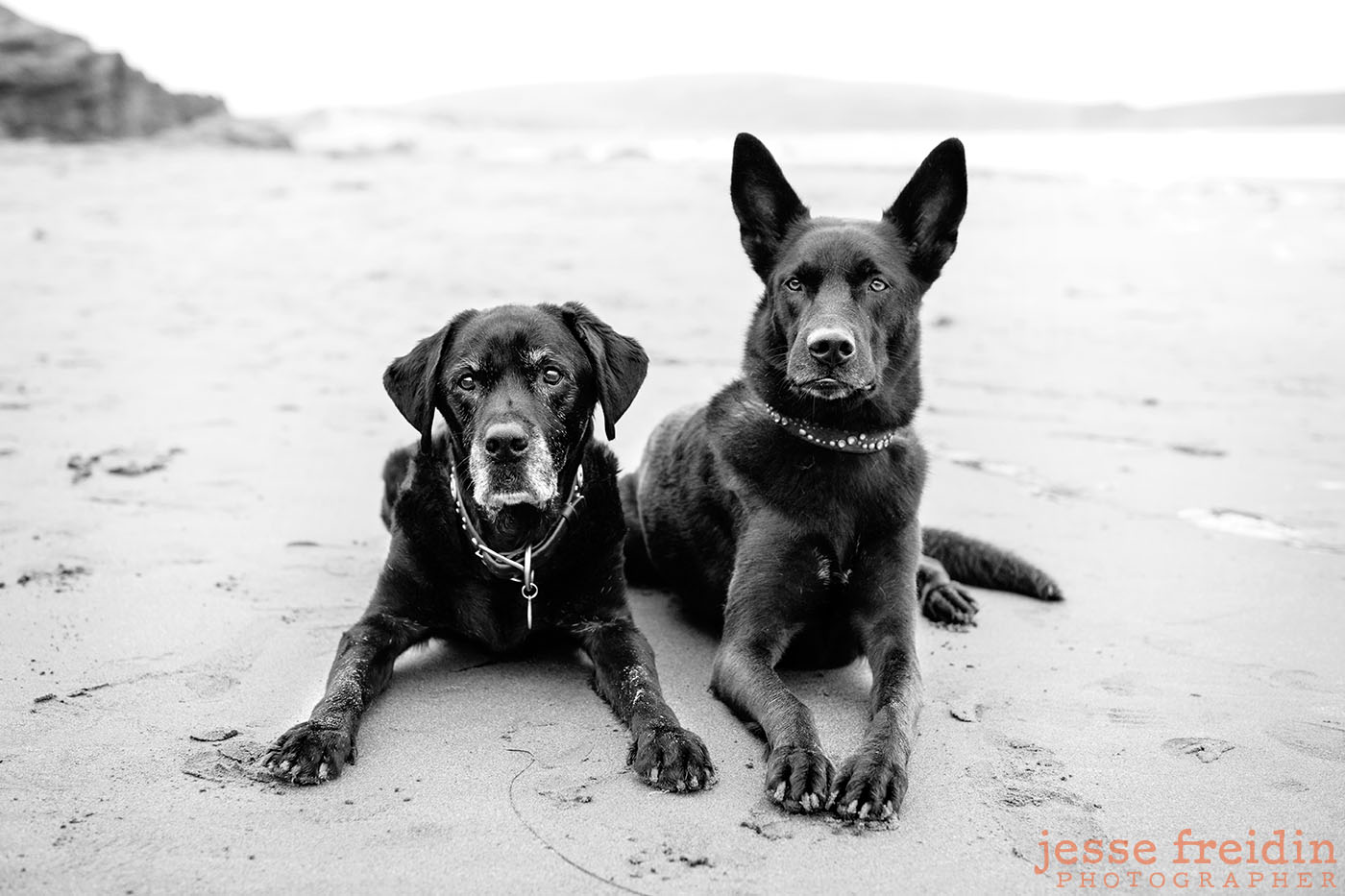 fine-art-pet-photography