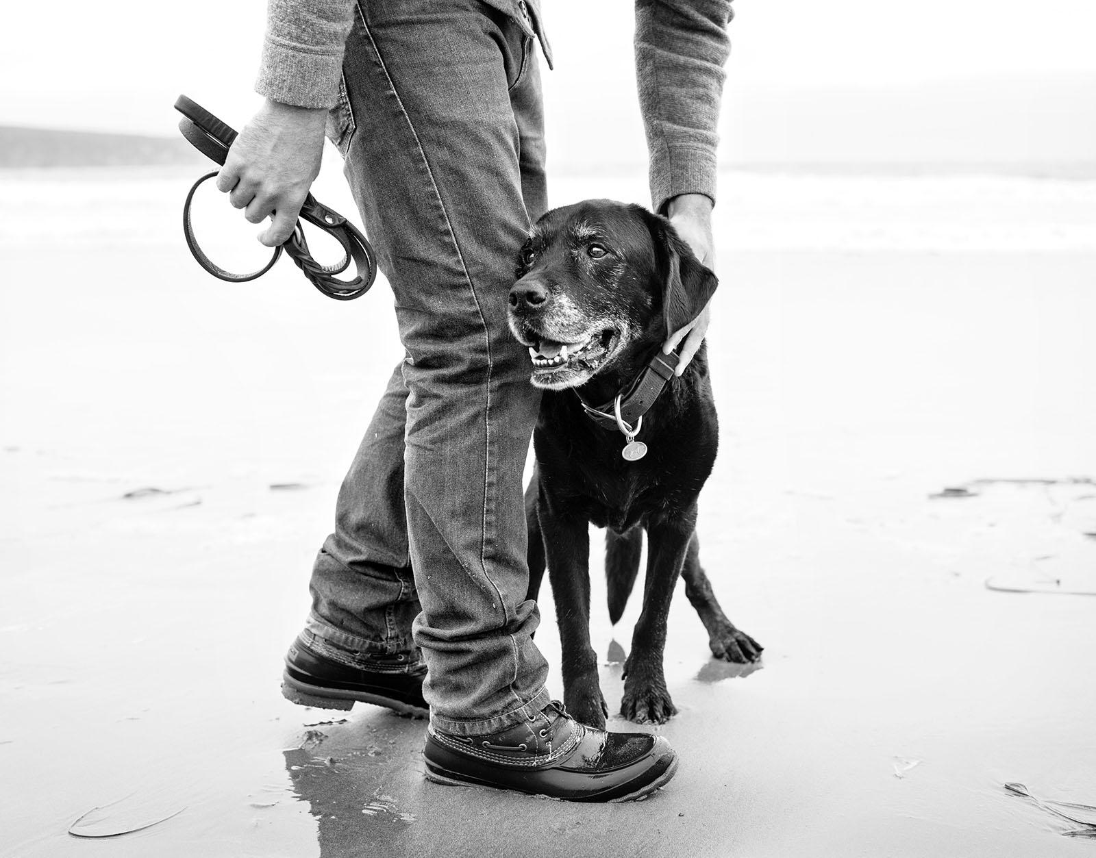 jessefreidinphotographer_dogs.jpg
